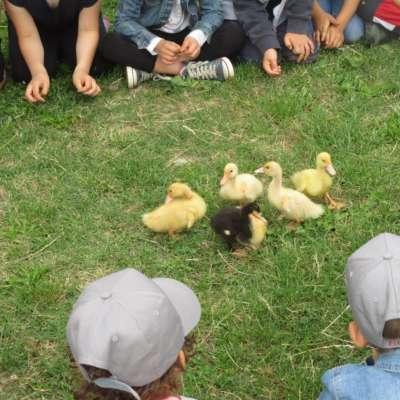 Settimane Verdi estate giocando in fattoria